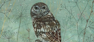 Little Owl by Anne Mortimer