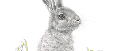 Hare by Anne Mortimer