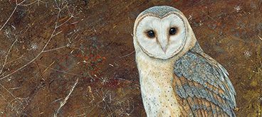 Barn Owl by Anne Mortimer